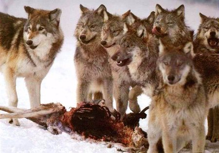 "It is a work of charity to cry ""Behold the wolf!"" when it is amidst the flock, or anywhere else it is found"