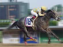 Monarchos, 2001 Kentucky Derby Winner