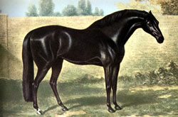 Godolphin Arabian