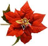Joyful Expectation for Christmas