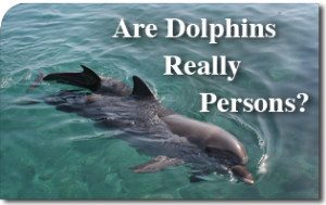 Are Dolphins Really Persons?