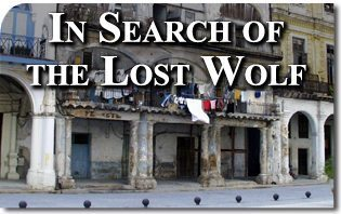 In Search of the Lost Wolf
