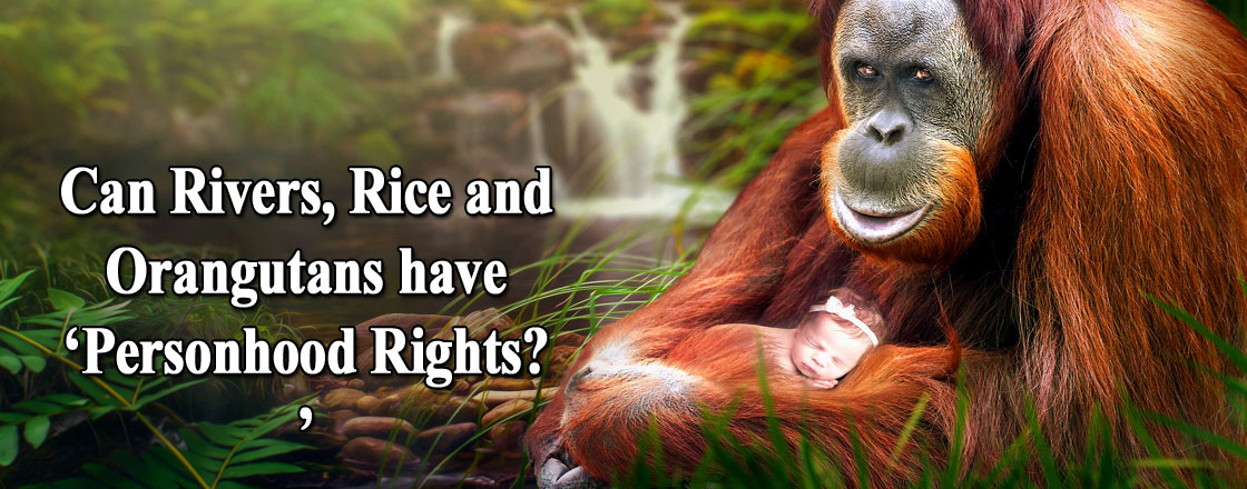 Can Rivers, Rice and Orangutans have 'Personhood Rights?'